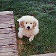 Lucky as a puppy